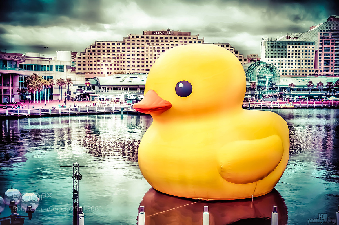 Photograph RUBBER DUCK by KAphotography  on 500px
