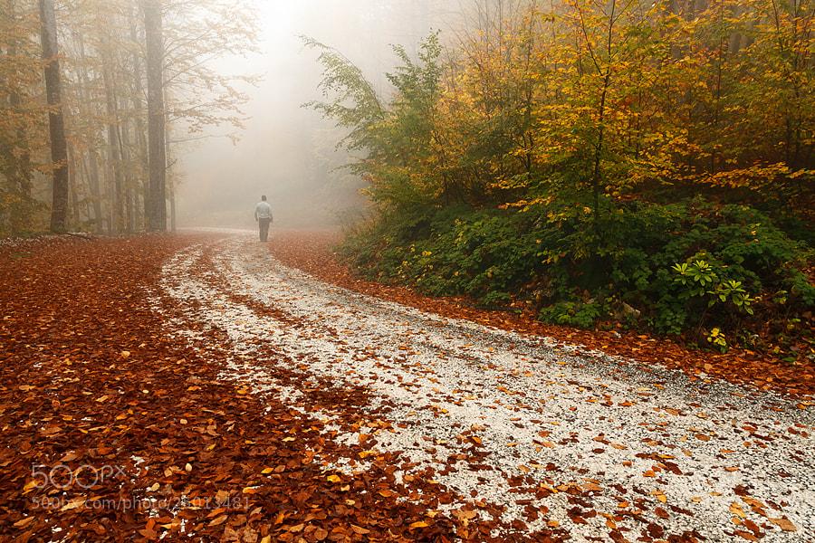 Photograph Through the mist by kani polat on 500px