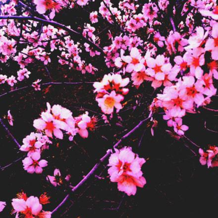spring has come, Canon POWERSHOT A430