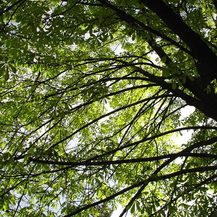 Tree, Sony DSC-V1