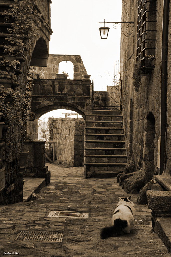 Photograph The alley and the cat by Sandro L. on 500px