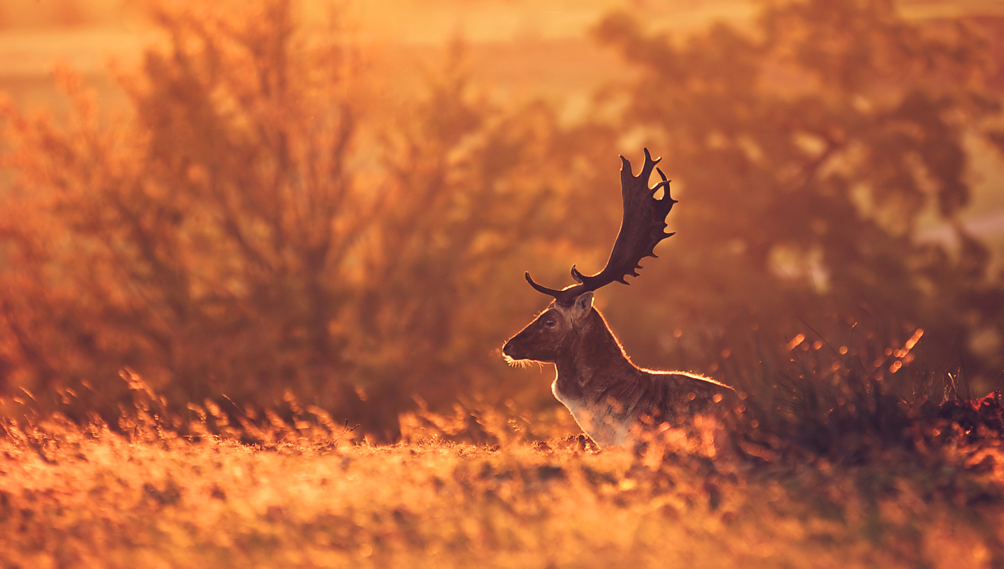 Photograph little bit of breath by Mark Bridger on 500px