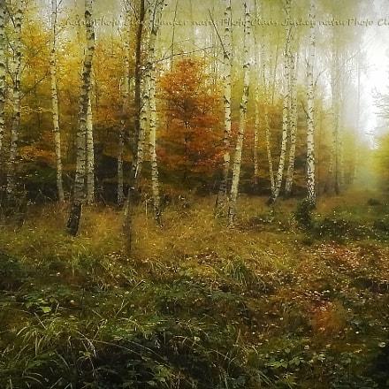Herbstlicher Birkenwald, Panasonic DMC-LZ7