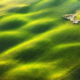 On wavy grassland by Marcin Sobas (MarcinSobas)) on 500px.com