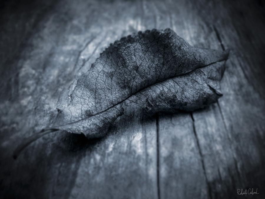 Voci invernali de Roberto Cabral │Image & Photography en 500px.com