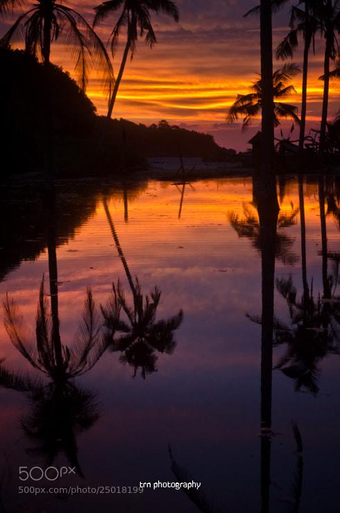 Photograph Coconut tree reflection by Wisnu Taranninggrat on 500px