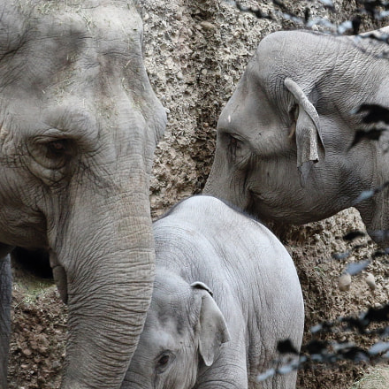 Elephant Family, Canon EOS 1200D
