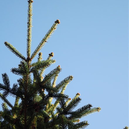 Tree, Fujifilm FinePix S2950