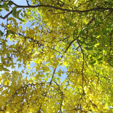 Ginko tree, Fujifilm FinePix S2950