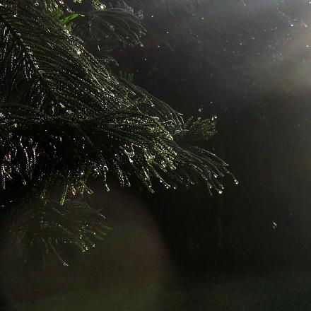 morning wet, Canon POWERSHOT SX230 HS