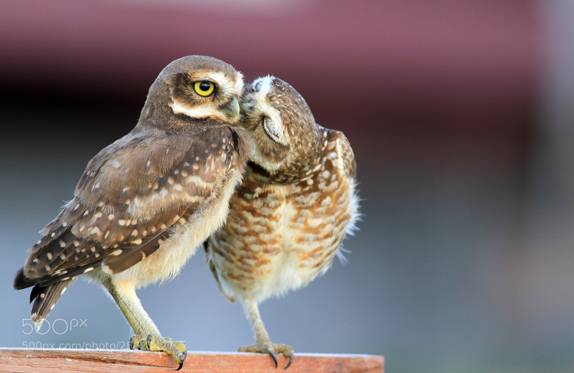 Photograph Kiss me!! by Itamar Campos on 500px