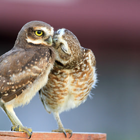 Kiss me!! by Itamar Campos (ItamarCampos)) on 500px.com
