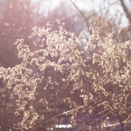 Sunny day still life, Sony SLT-A37, Minolta AF 50mm F1.7