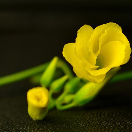 Springtime flower, Nikon D7100, AF Zoom-Nikkor 28-85mm f/3.5-4.5