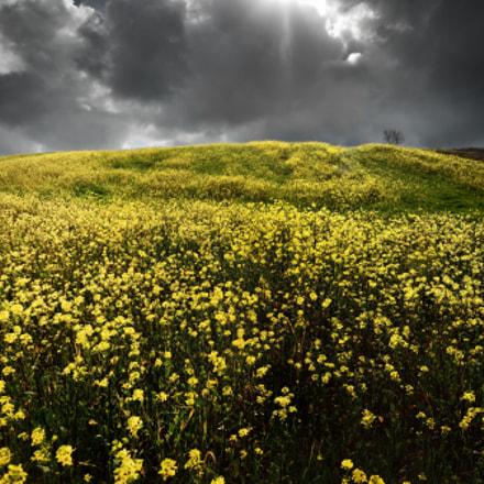 Prelude to Spring, Nikon D610