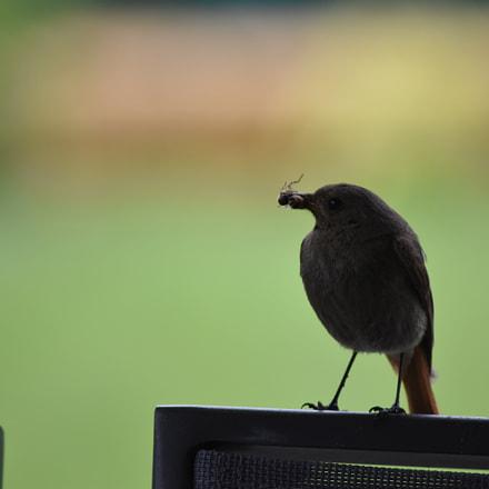 L'oiseau, Nikon D5500, AF-S DX VR Nikkor 55-300mm f/4.5-5.6G ED