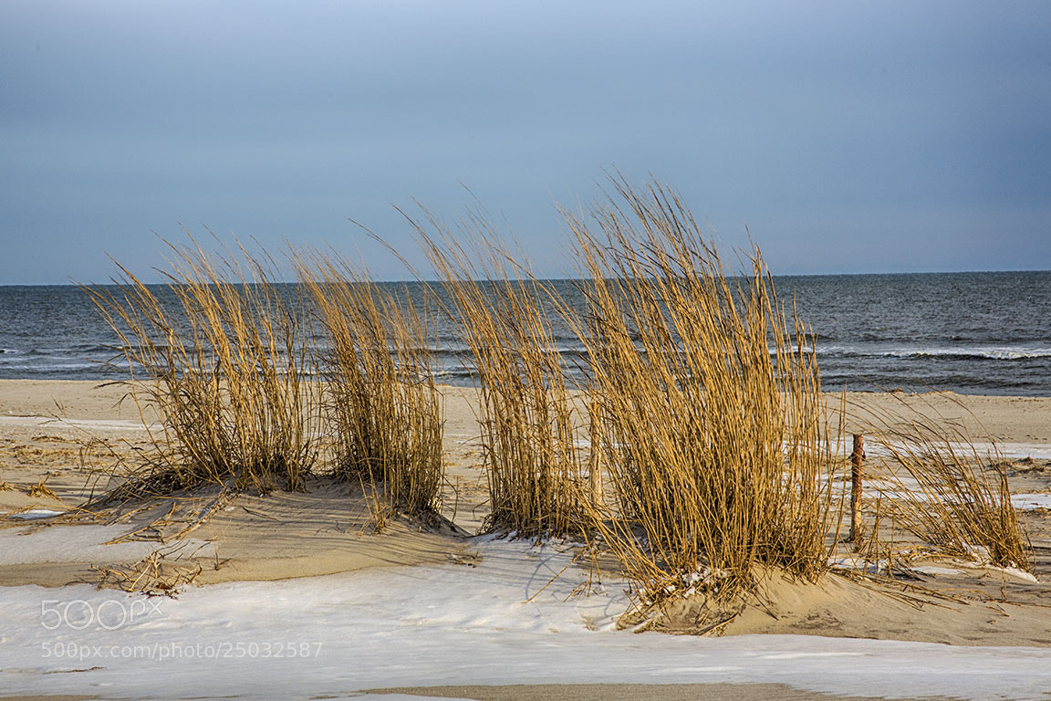 Photograph Dune Grass in Winter by Sonny Hamauchi on 500px