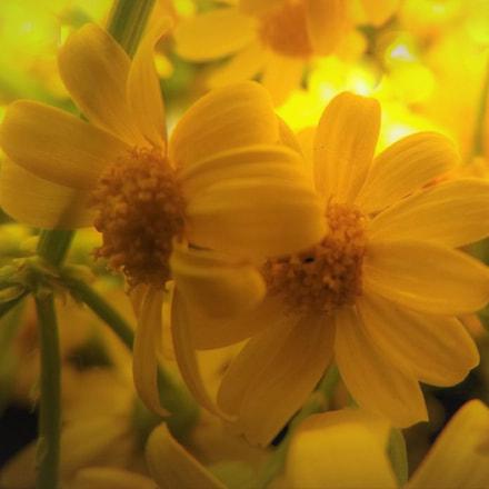 Wildflowers, Fujifilm FinePix S8600 S8650 S8630
