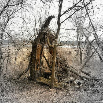 Ein Baum der Geschichte, Nikon D7100, Sigma 18-250mm F3.5-6.3 DC OS HSM