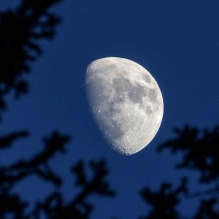 January Moon, Panasonic DMC-FZ60