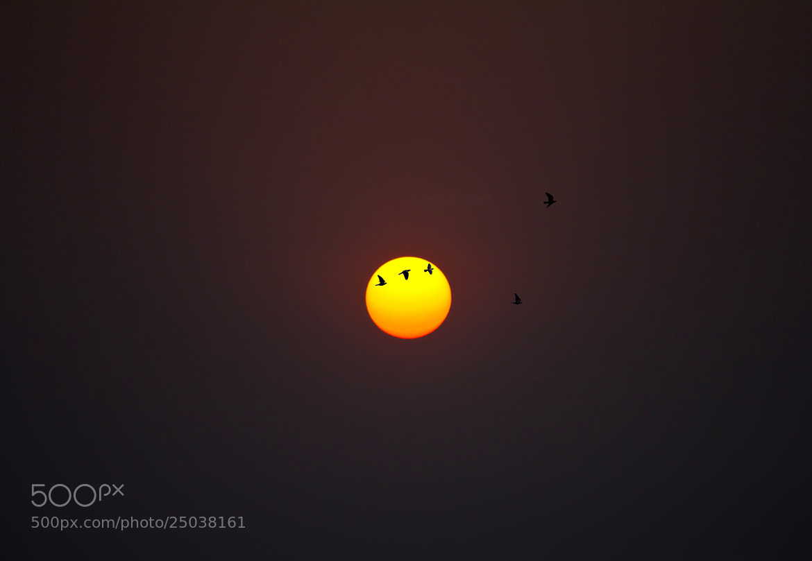 Photograph Sunset -2 by Sreekumar  Mahadevan Pillai on 500px