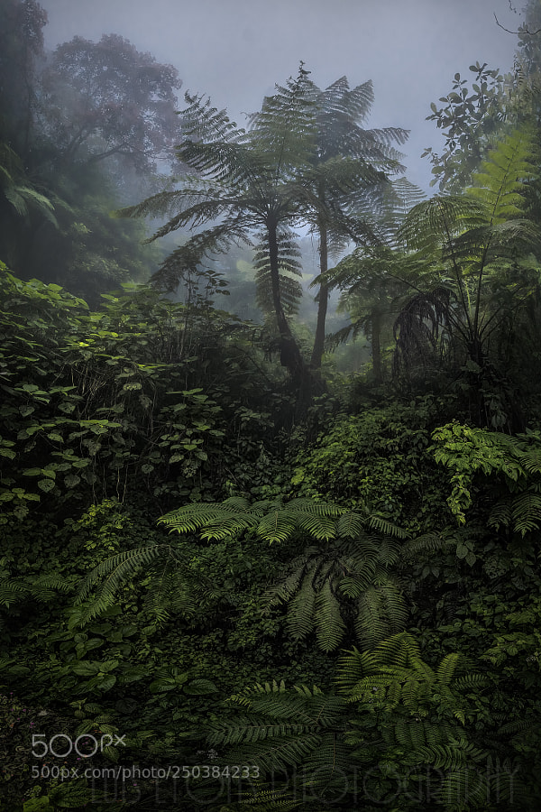 Sierra Norte Ferns