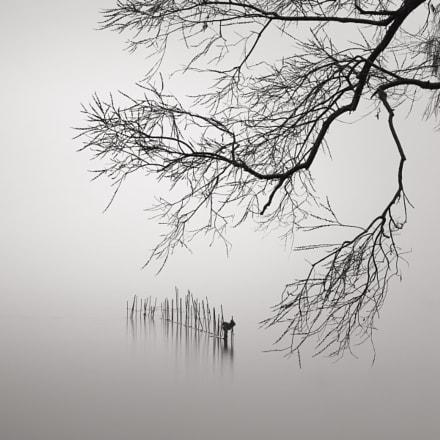 An exotic stillness