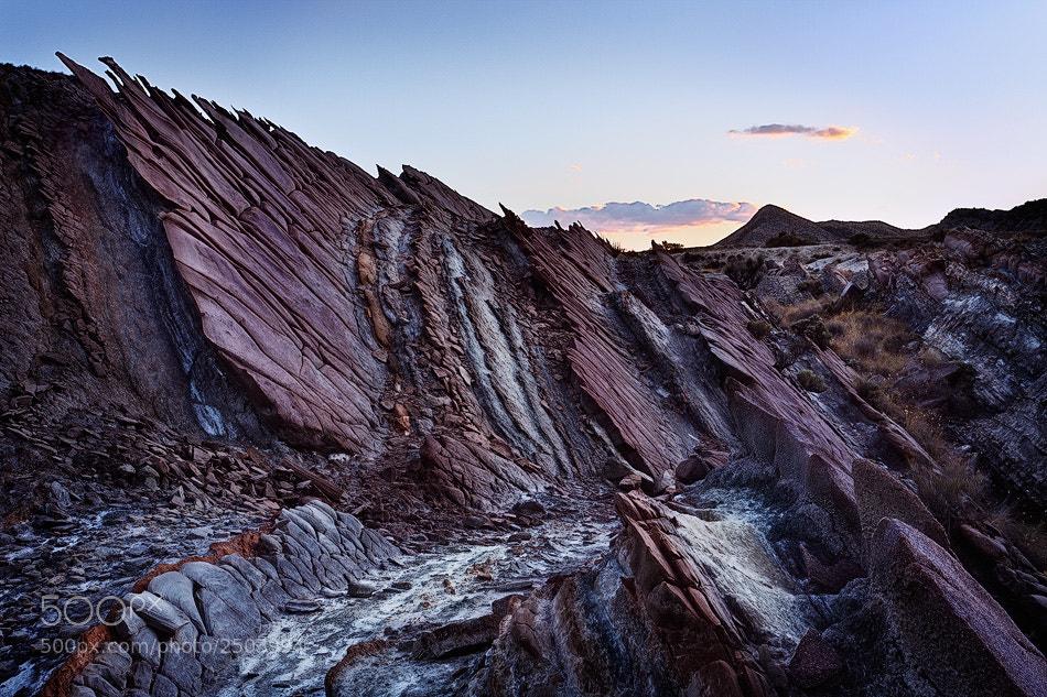 Photograph abanicos marinos en el desierto II by Enrique Capilla Gómez on 500px