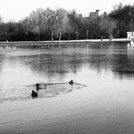 Ducks on lake, Canon EOS 750D, Canon EF-S 18-55mm f/3.5-5.6 IS STM