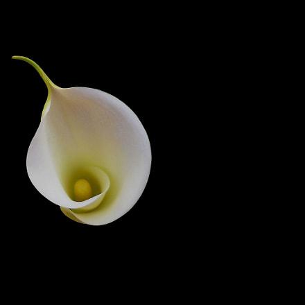 Tenderness, Nikon COOLPIX S4000