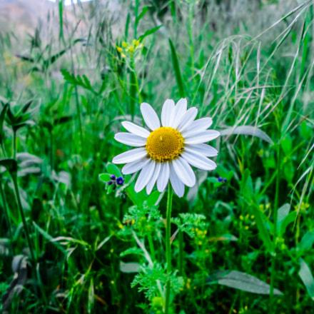 Flower, Sony DSC-W350
