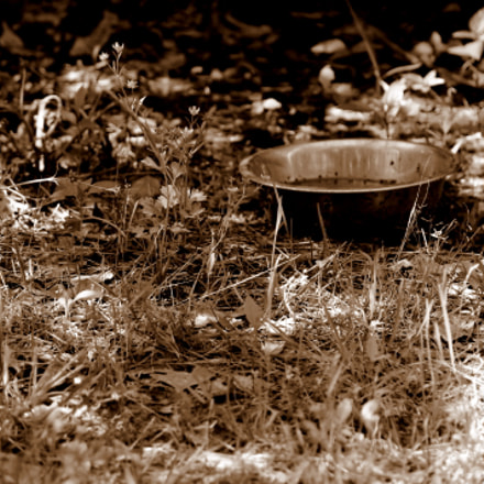 Untouched Yards, Louisiana, April 2012, Canon EOS REBEL T3, Canon EF-S 55-250mm f/4-5.6 IS II