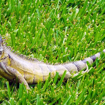 Lizard, Fujifilm FinePix S8400W