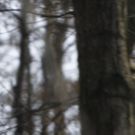 Vol Forestier - Forest, Nikon D7200, AF-S VR Zoom-Nikkor 70-200mm f/2.8G IF-ED