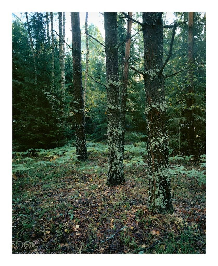 Photograph Forest by Sergey Kuznetsov on 500px