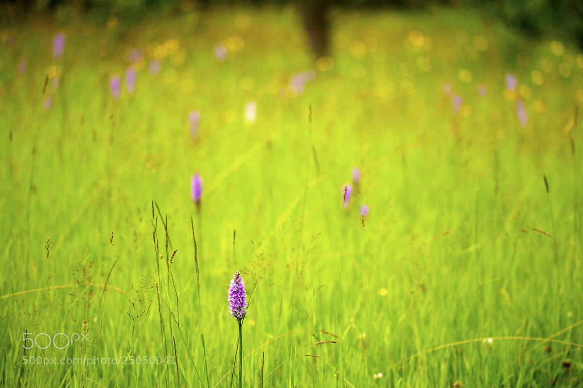 Photograph Wild Orchid in Field_1 by Graham Riddell on 500px