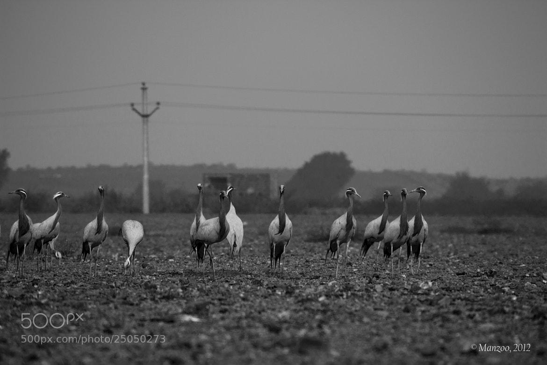 Photograph Standing Meeting by Manjunath Undi on 500px