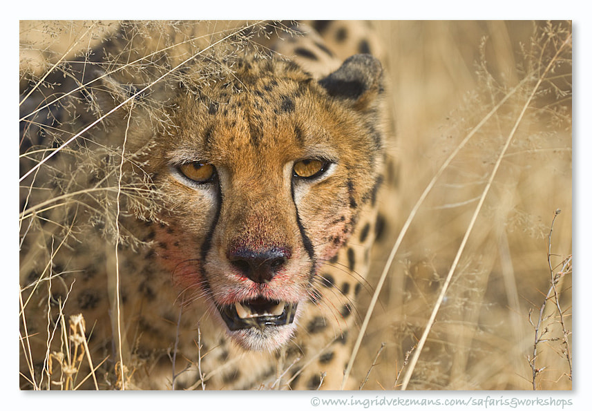 Photograph Carnivore by Ingrid Vekemans on 500px