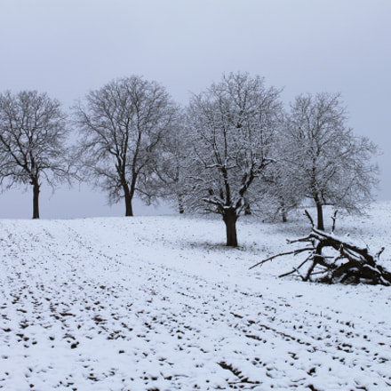 Winter mood, Canon EOS 500D, Canon EF-S 18-55mm f/3.5-5.6 IS