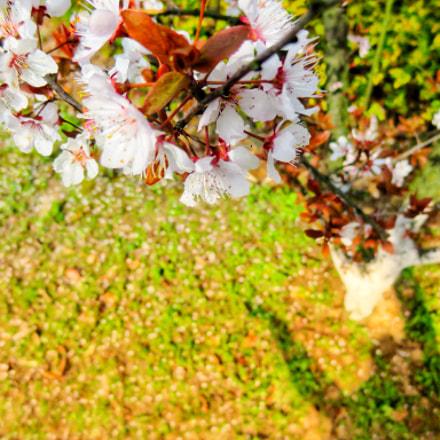 初春, Canon POWERSHOT N2