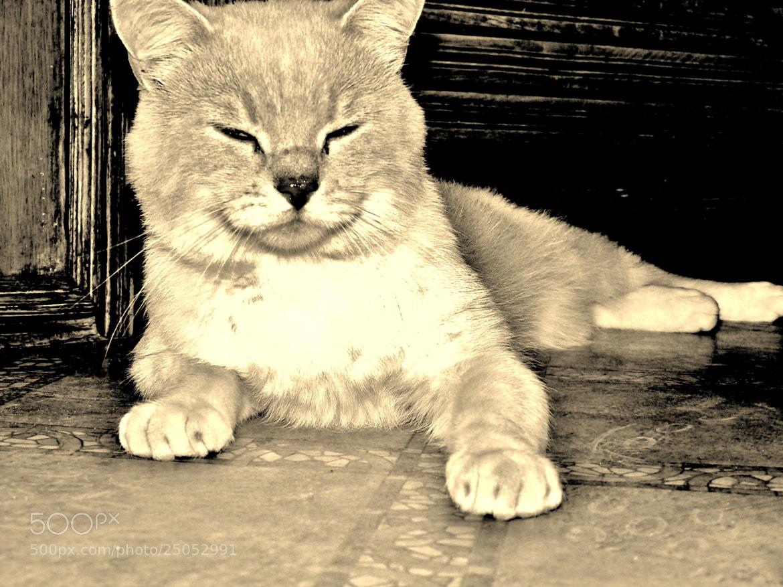 Photograph ryzikas(cat) by Mantas Klovas on 500px