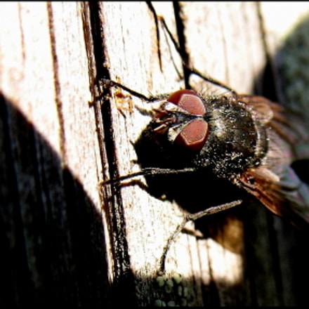 Very Young Fly waiting..., Canon POWERSHOT A620