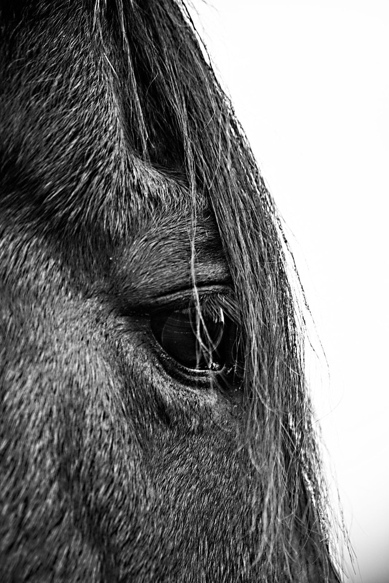 Photograph Horse's Eye View by Suzanne Kreitzberg on 500px