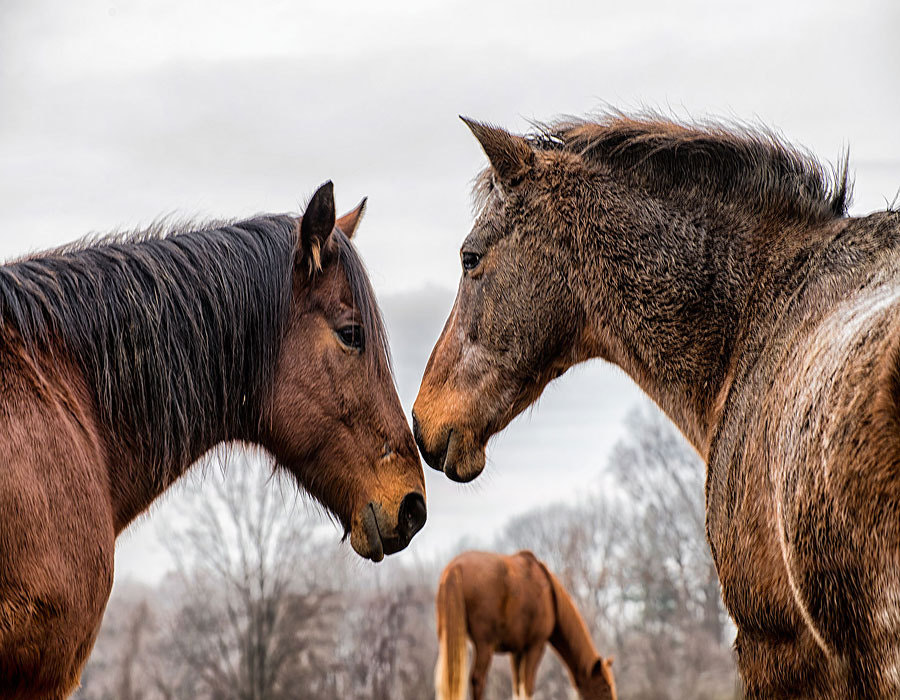 Photograph Nose to Nose by Suzanne Kreitzberg on 500px