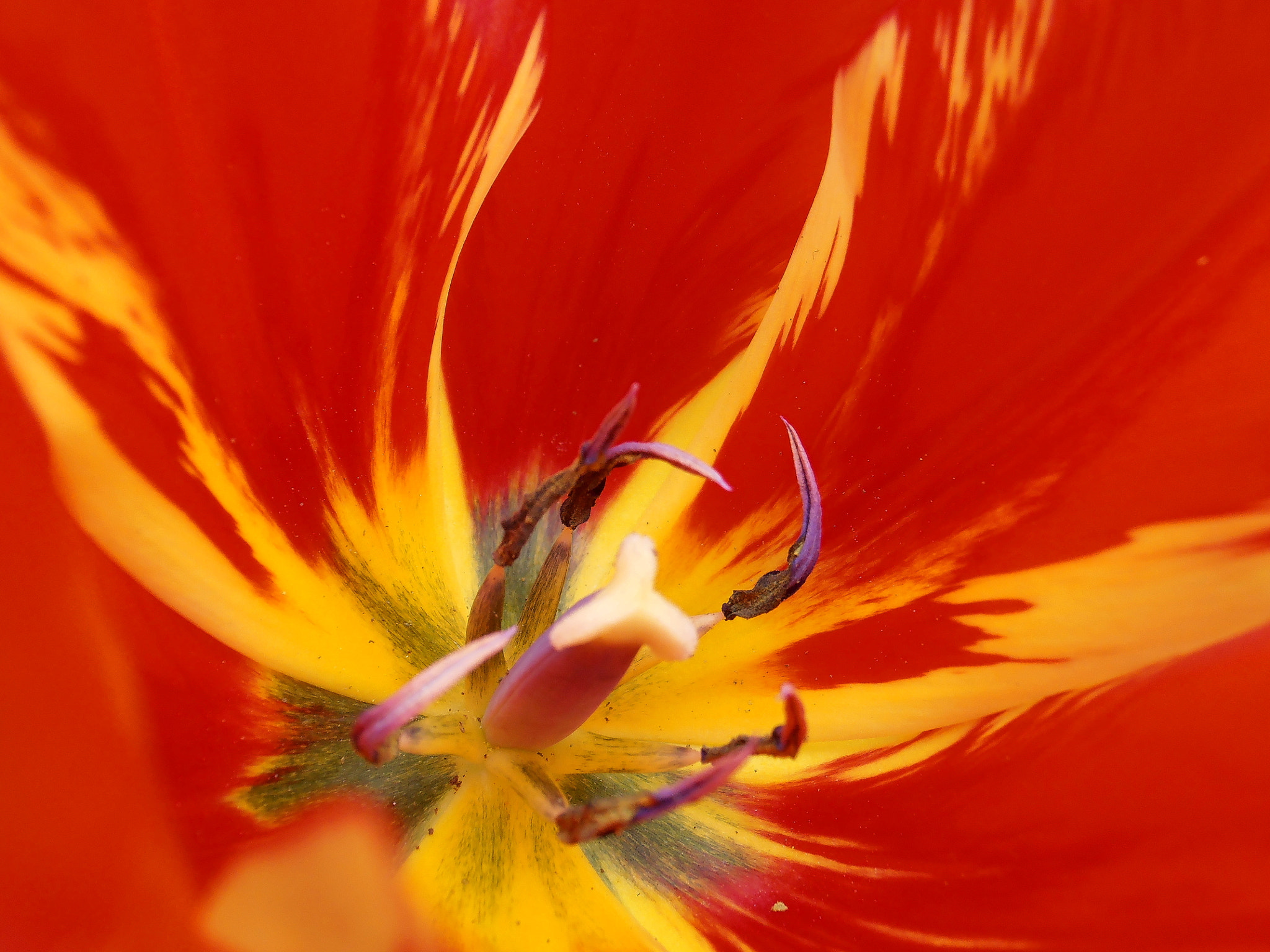 Photograph Red and yellow by Snezana Petrovic on 500px