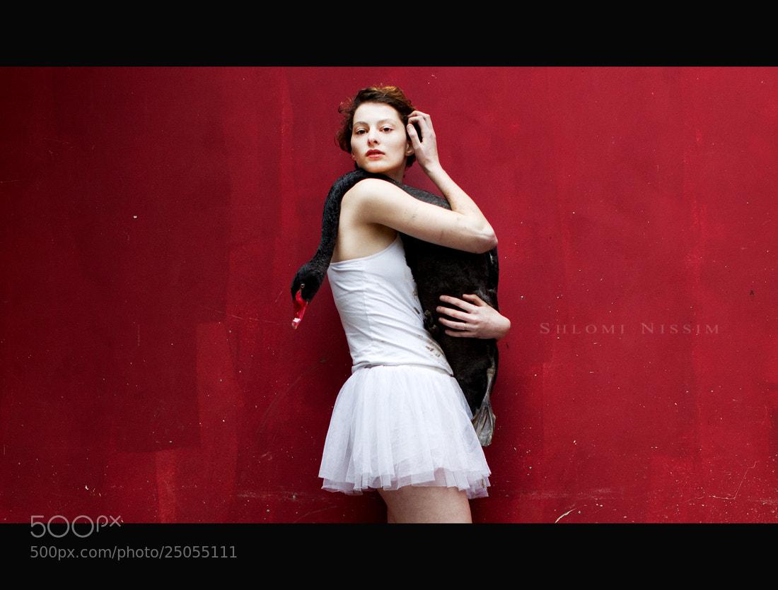 Photograph BLACK SWAN by shlomi nissim on 500px