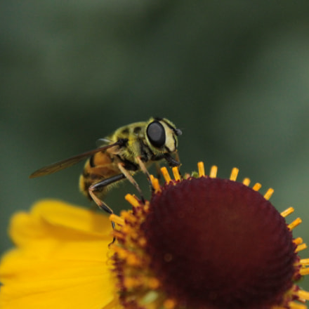 IMG, Canon EOS 500D, Canon EF-S 18-55mm f/3.5-5.6 IS
