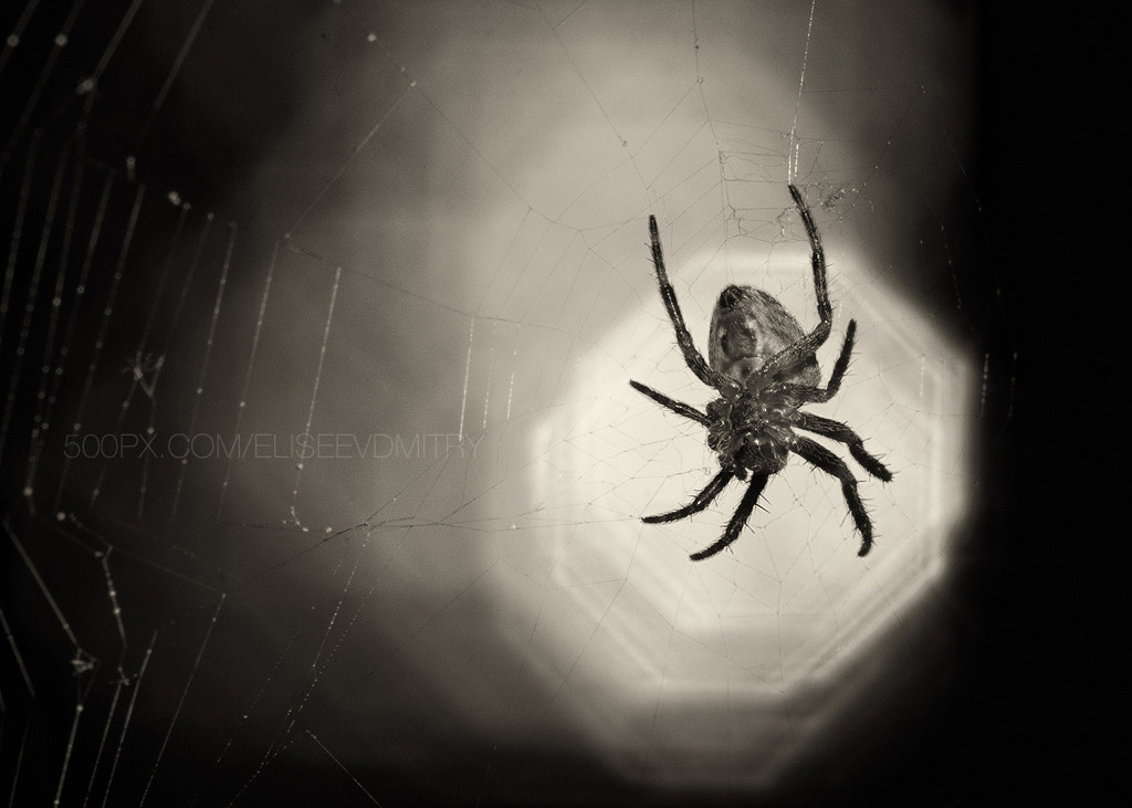 Photograph Spider on a bokehd background sun by Dmitry Eliseev on 500px