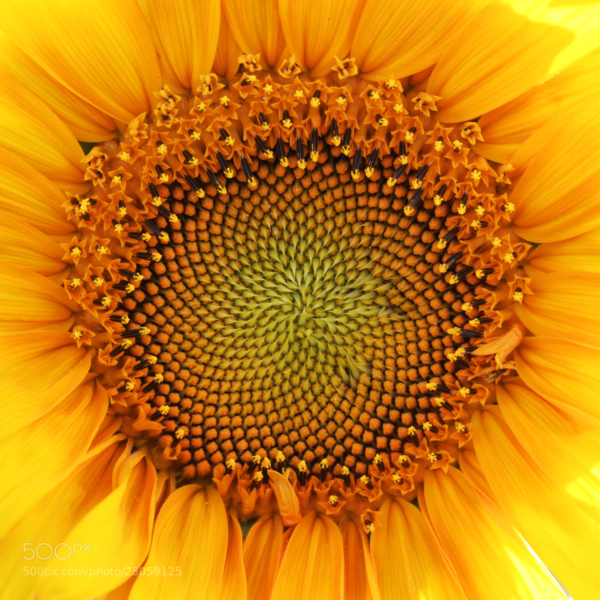 Photograph If the sun was a flower! by Eddie K on 500px