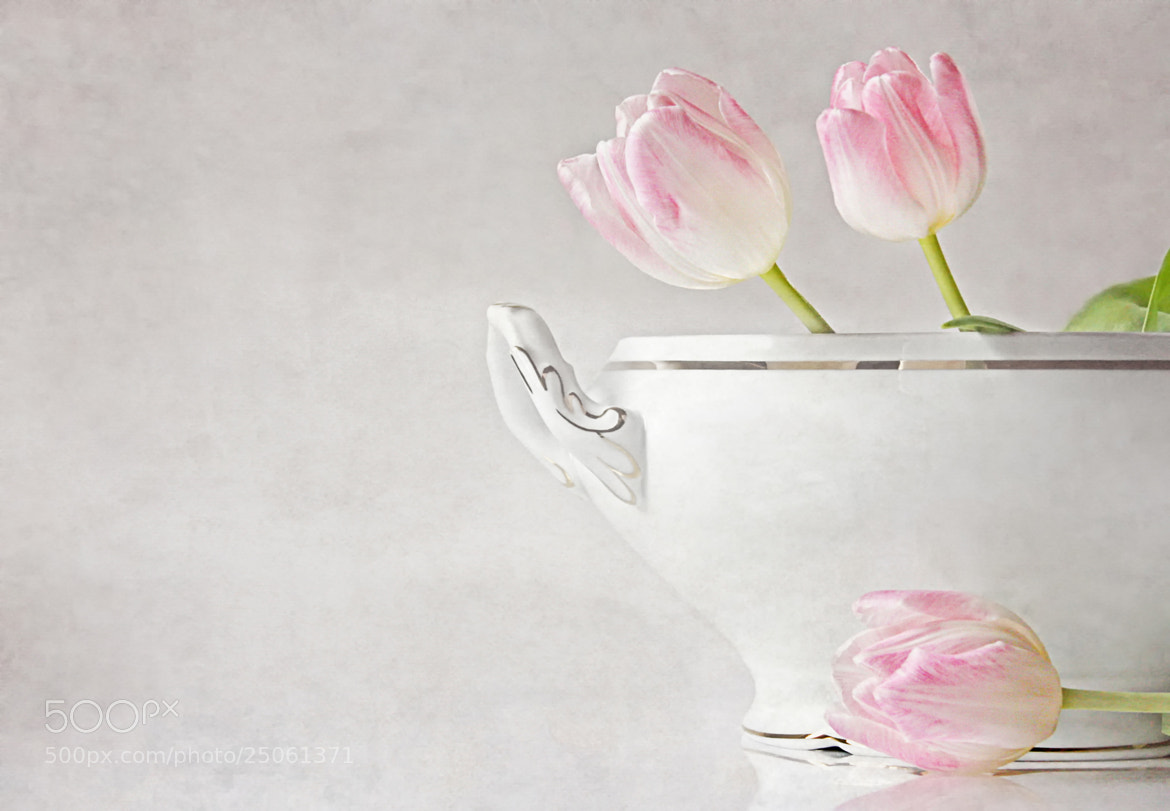 Photograph soupes de tulipes by Claudia Moeckel on 500px